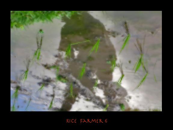 ricefarmer6