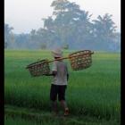 1.6-rice_farmer