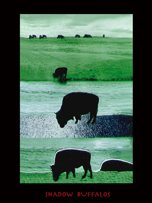 shadow_buffalos